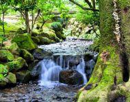 Water - Kenroku-en Gardens